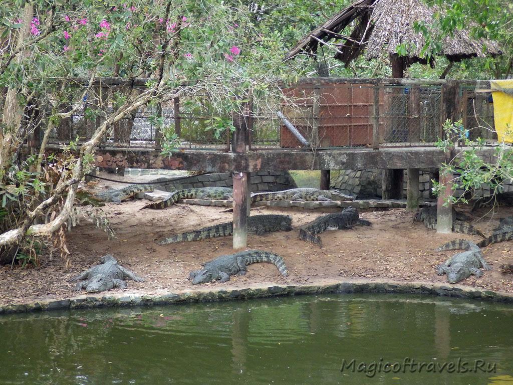 crocodile14