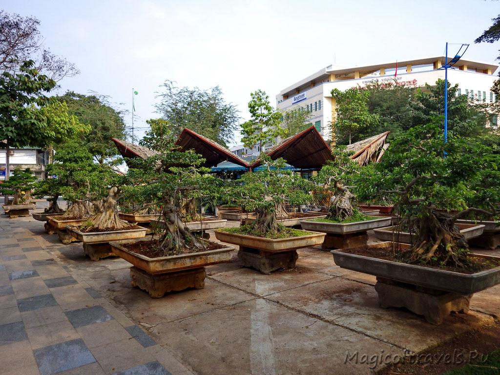 vung-tau31