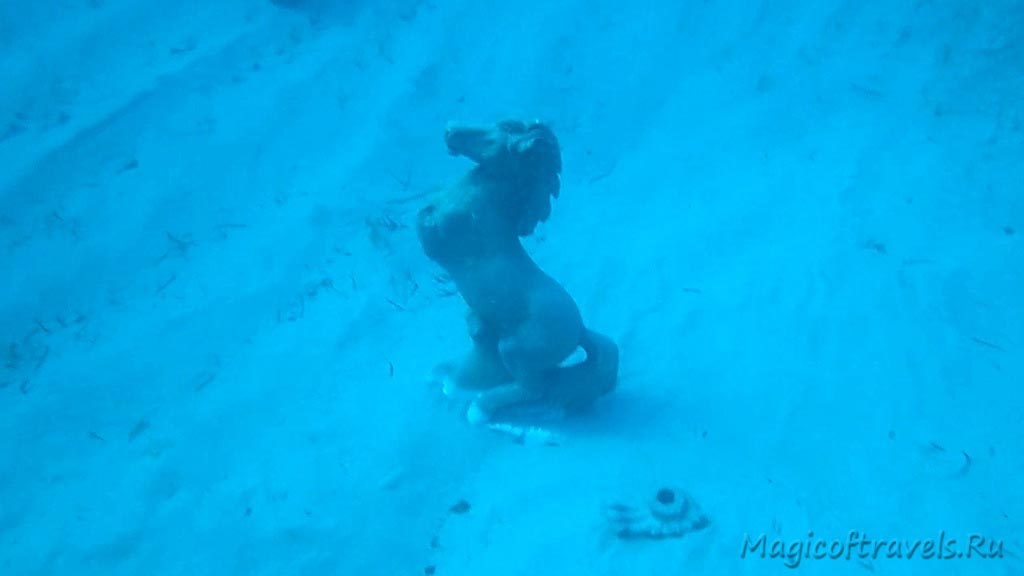 diving43