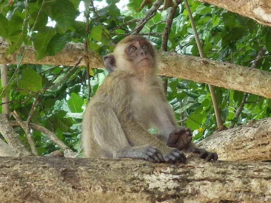 monkey-0001