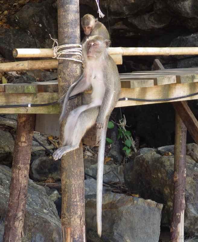 monkey-01 - копия