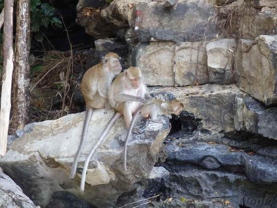 monkey-07 - копия