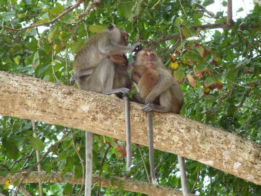 monkey-08 - копия