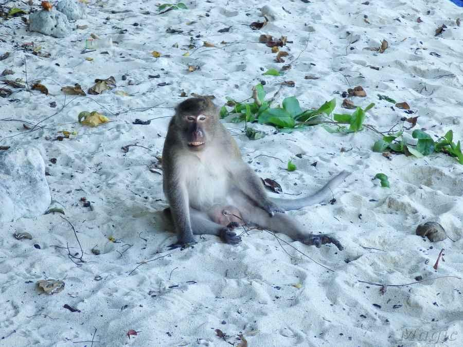 monkey-12 - копия