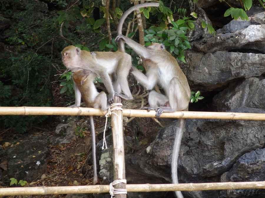 monkey-15 - копия