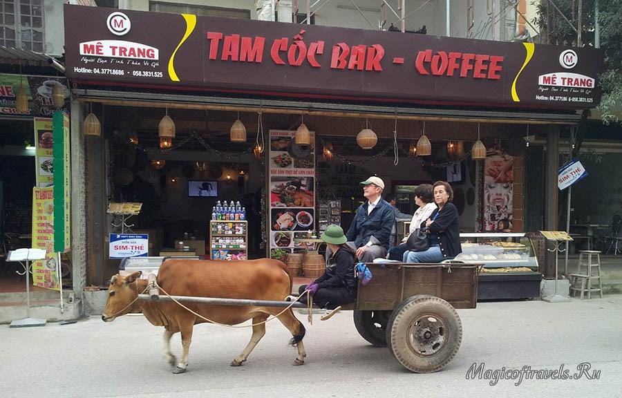 Вот для чего ещё нужна корова?