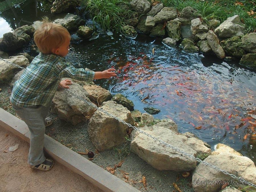 Какое же удовольствие покормить рыбок