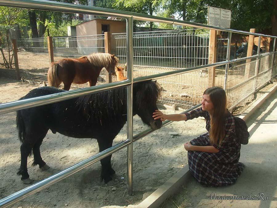 Угостите лошадку